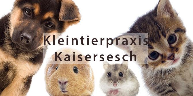 Kleintierraxis